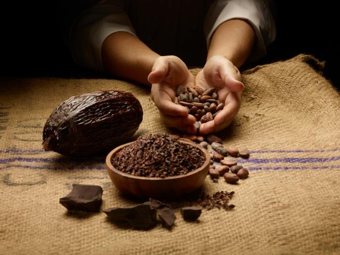 Çekirdekten çikolataya